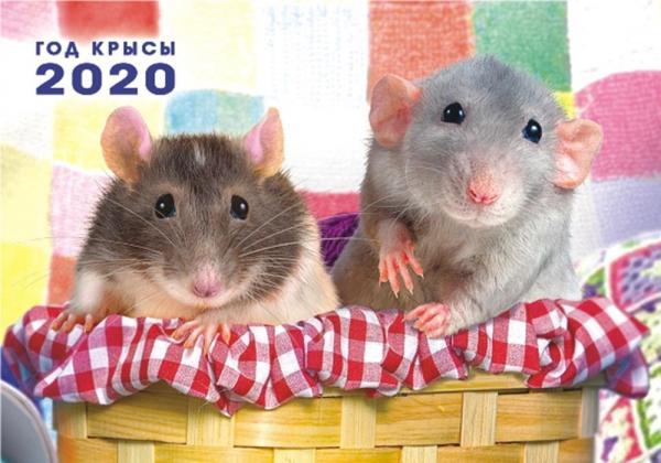 2020 год металлической крысы, что принесет для каждого знака восточного календаря